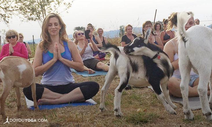 yoga e capre