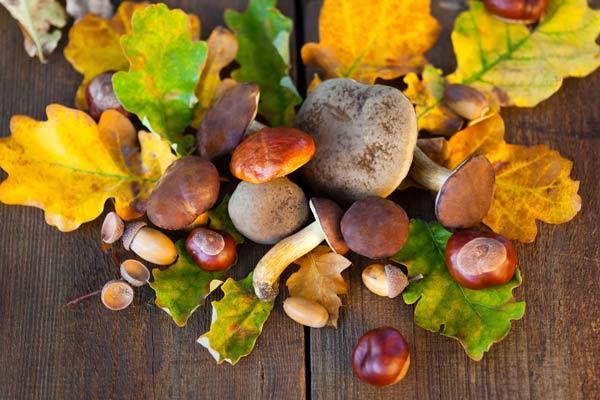 autunno-buone-ragioni-11