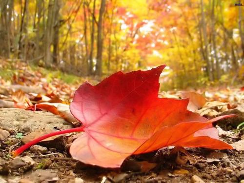 autunno amore