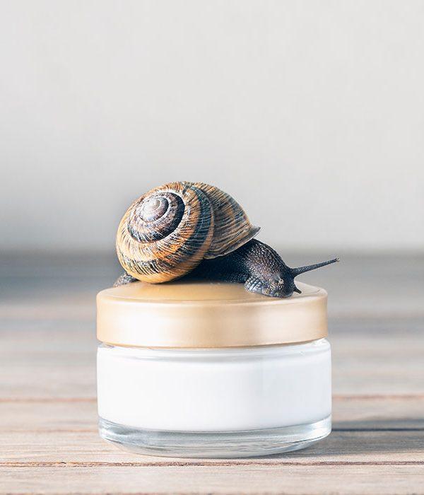 Crema-rigenerante-per-il-viso-alla-bava-di-lumaca-come-viene-estratta-e-quali-benefici-ha-per-la-pelle-francesca-leto