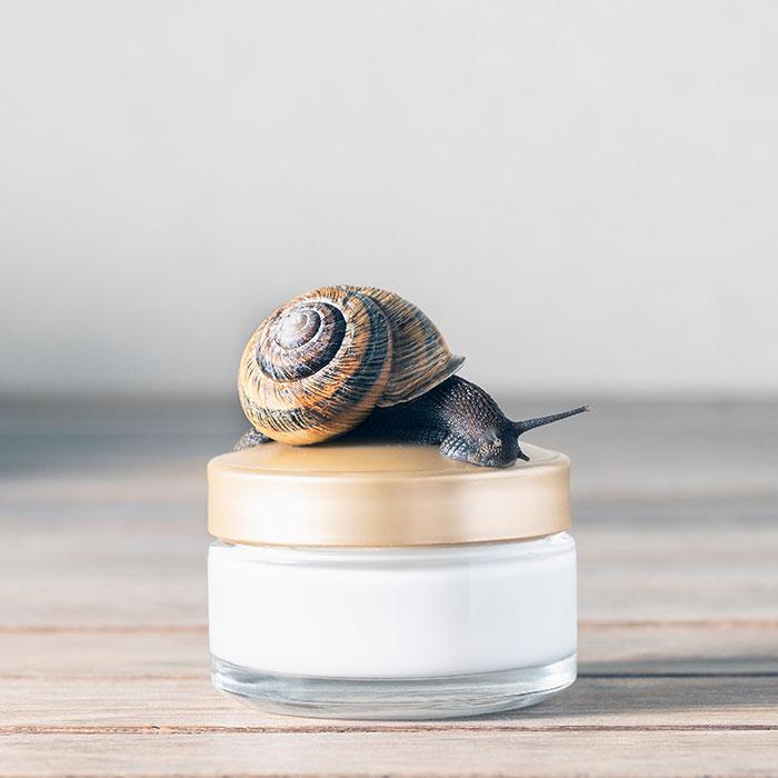Crema rigenerante per il viso alla bava di lumaca: come viene estratta e quali benefici ha per la pelle